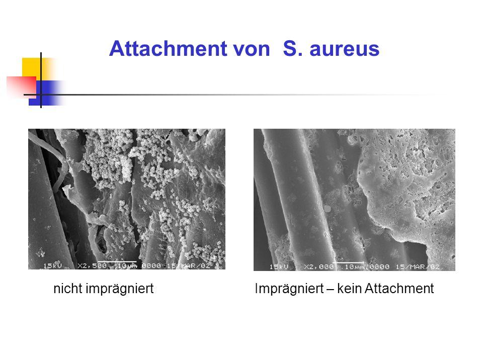 Attachment von S. aureus nicht imprägniertImprägniert – kein Attachment