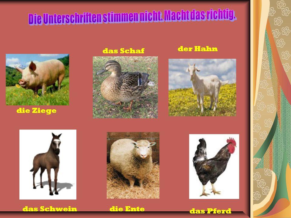 die Ziege das Schaf der Hahn das Schweindie Ente das Pferd