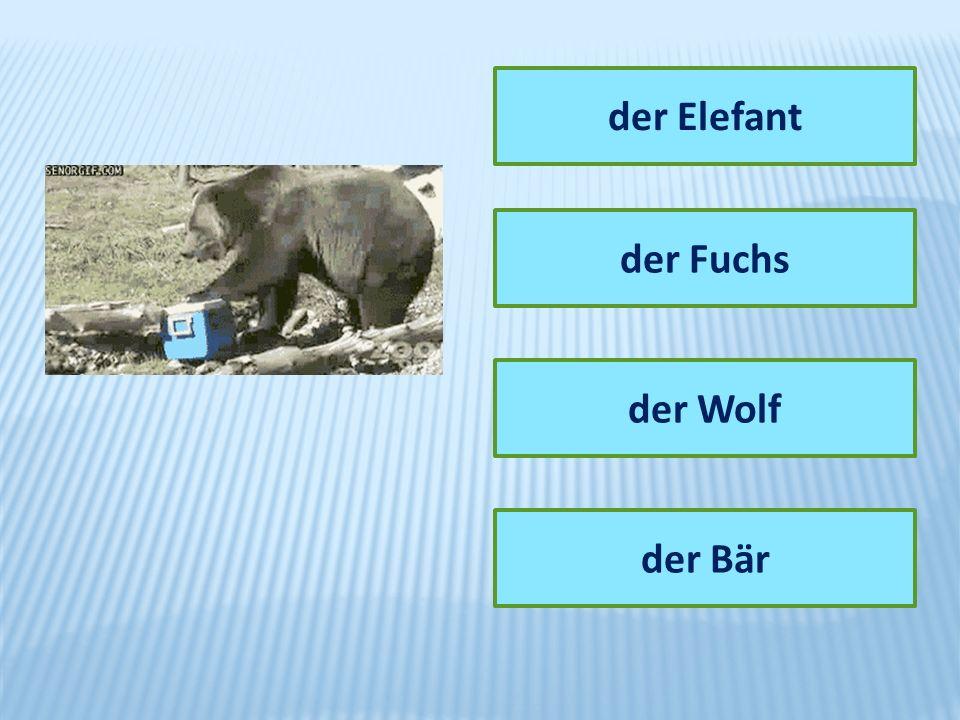 der Elefant der Fuchs der Wolf der Bär