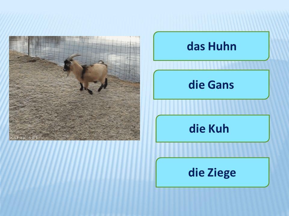 das Huhn die Gans die Kuh die Ziege