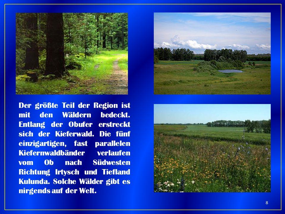 Der größte Teil der Region ist mit den Wäldern bedeckt. Entlang der Obufer erstreckt sich der Kieferwald. Die fünf einzigartigen, fast parallelen Kief