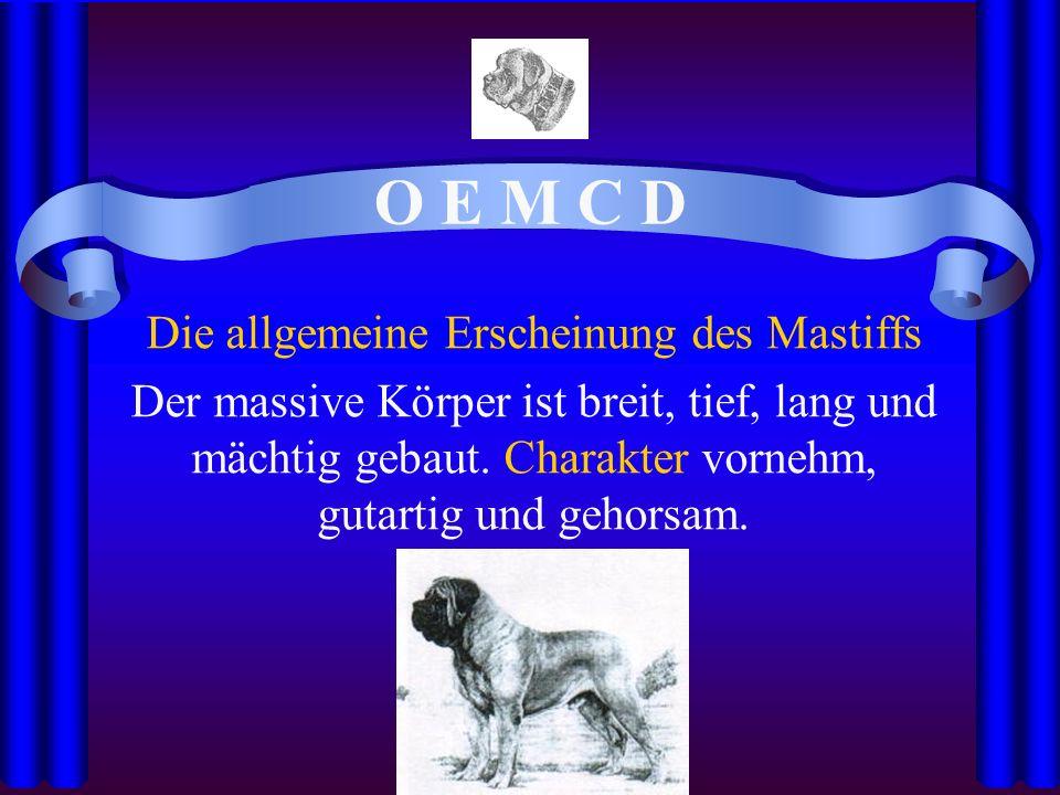 O E M C D Die allgemeine Erscheinung des Mastiffs Der massive Körper ist breit, tief, lang und mächtig gebaut.
