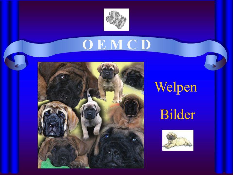 O E M C D Bilder Welpen