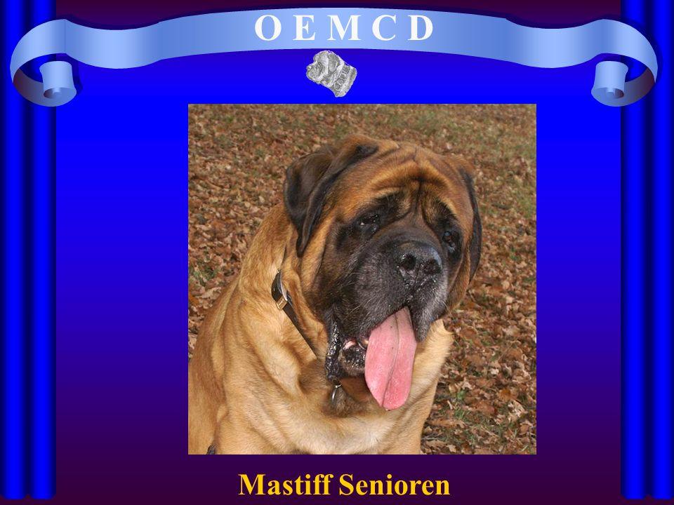 O E M C D Mastiff Senioren