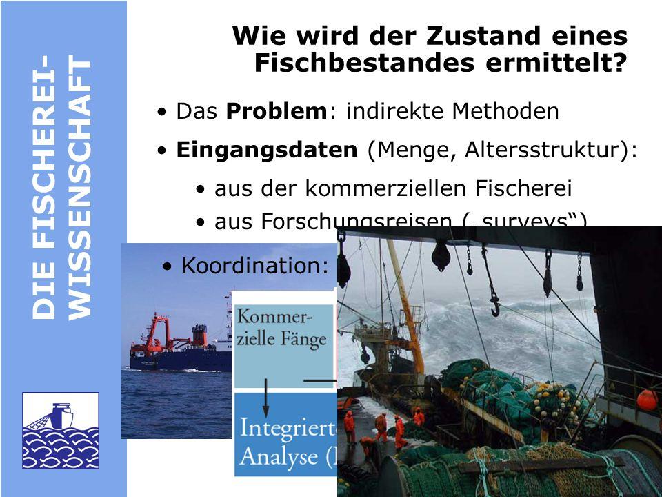 DIE FISCHEREIWISSENSCHAFT : BEISPIELE Nordseehering: Erster nach dem Vorsorge- ansatz bewirtschafteter Bestand in der EU