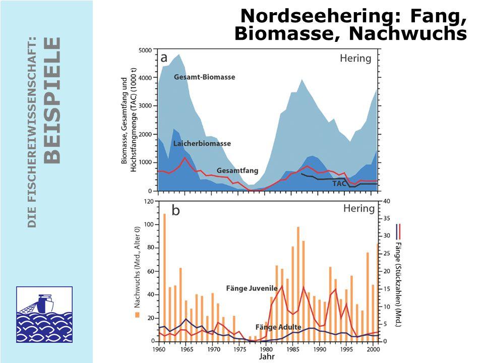 DIE FISCHEREIWISSENSCHAFT : BEISPIELE Nordseehering: Fischereiliche Sterblichkeit Management-Plan