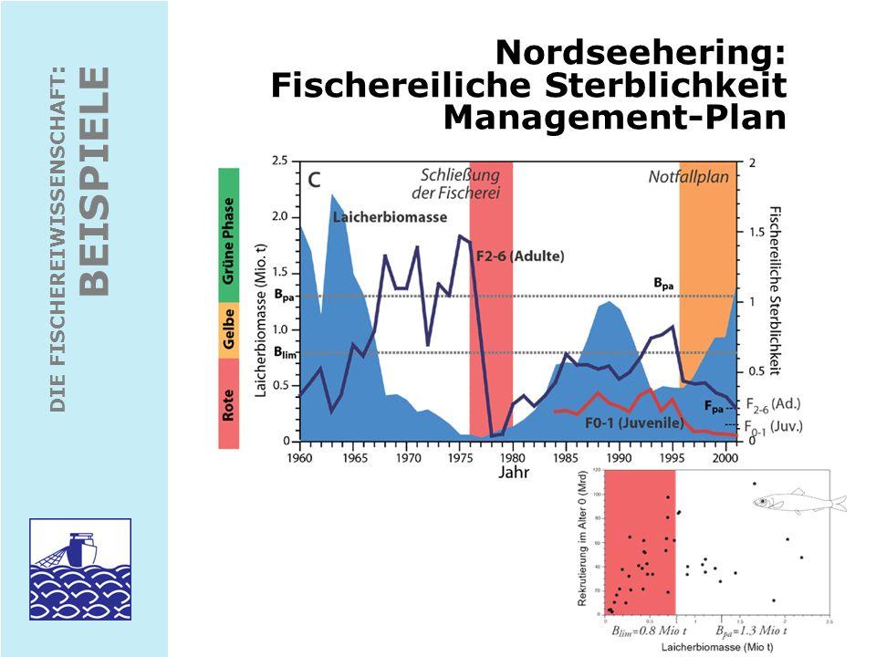 DIE FISCHEREIWISSENSCHAFT : BEISPIELE Nordseehering: Survey- Aufwand und -Indices