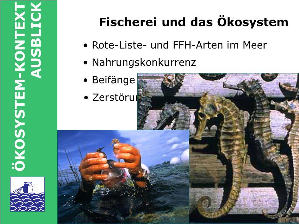 ÖKOSYSTEM-KONTEXT AUSBLICK Nutzerkonflikte: Beispiel Nordsee