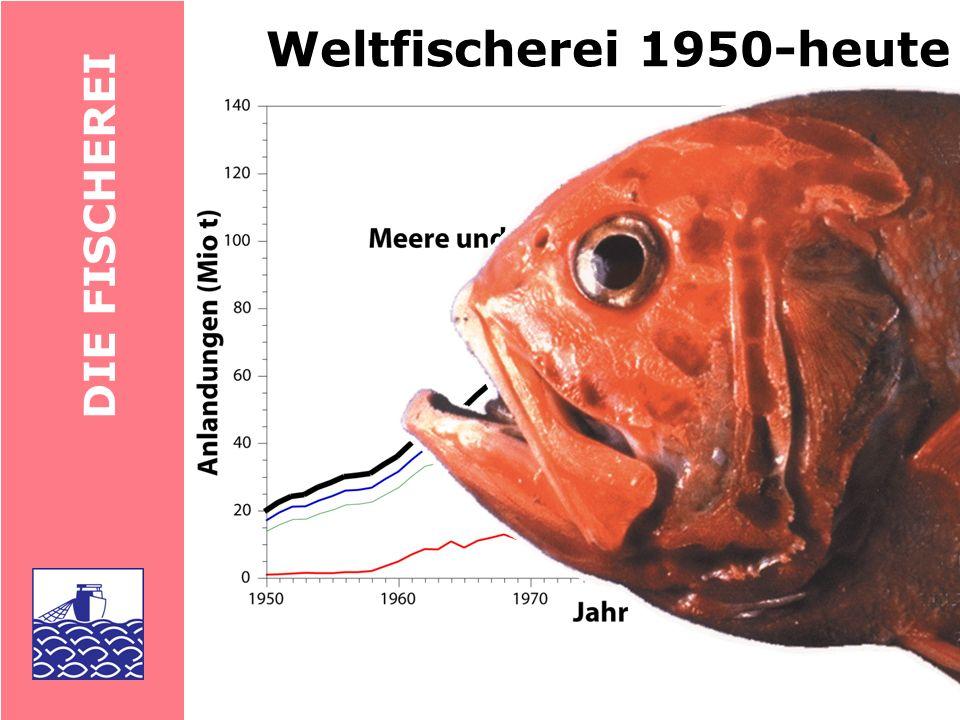 DIE FISCH Meeresfischerei 1950-heute IUU: Illegal, Unreported, Unregulated Discards: Rückwürfe