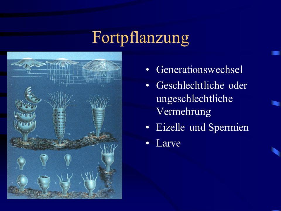 Fortpflanzung Generationswechsel Geschlechtliche oder ungeschlechtliche Vermehrung Eizelle und Spermien Larve