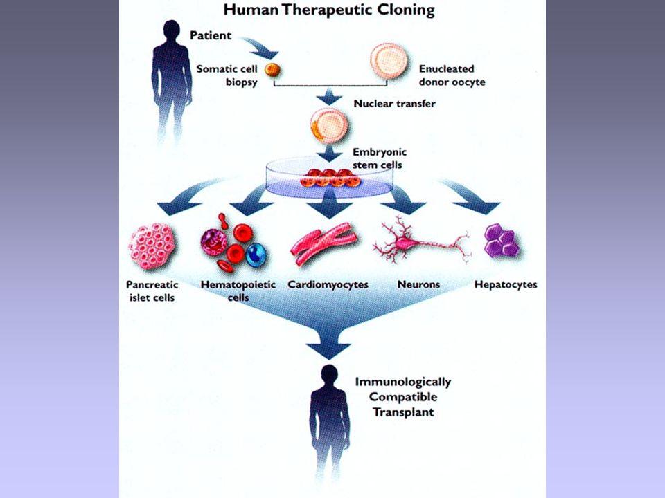 Embryonale Stammzellen Klonen Alternativen zum Klonen