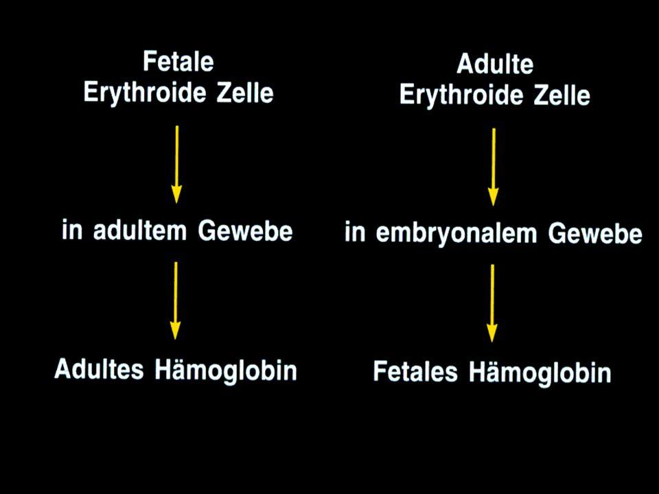 Das Ambiente moduliert die Progenitorzelle
