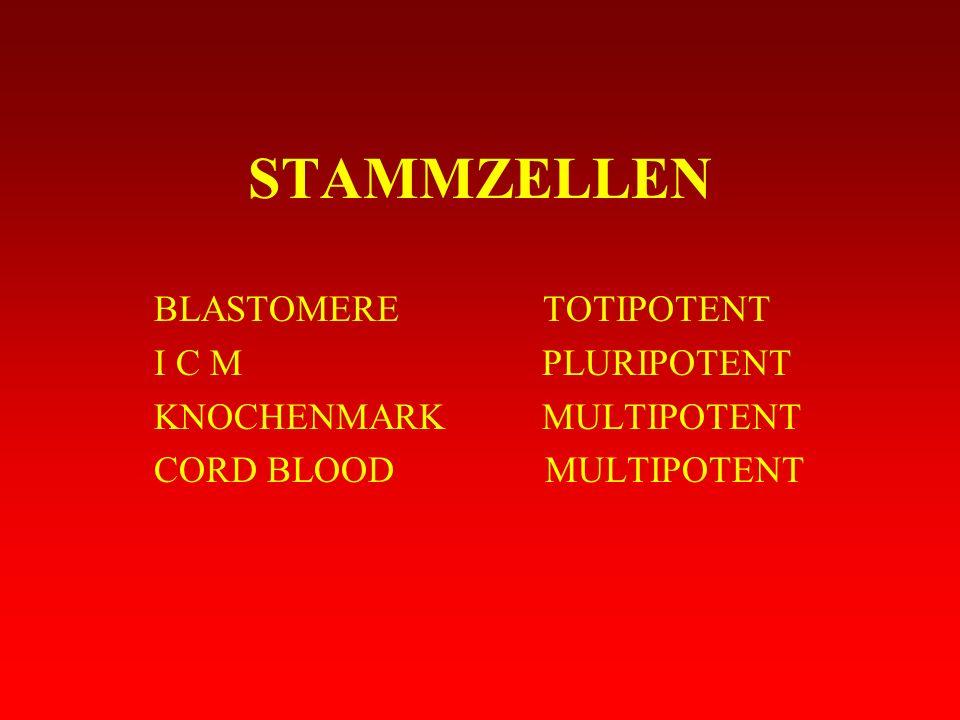 STAMMZELLEN BLASTOMERE TOTIPOTENT I C M PLURIPOTENT KNOCHENMARK MULTIPOTENT CORD BLOOD MULTIPOTENT