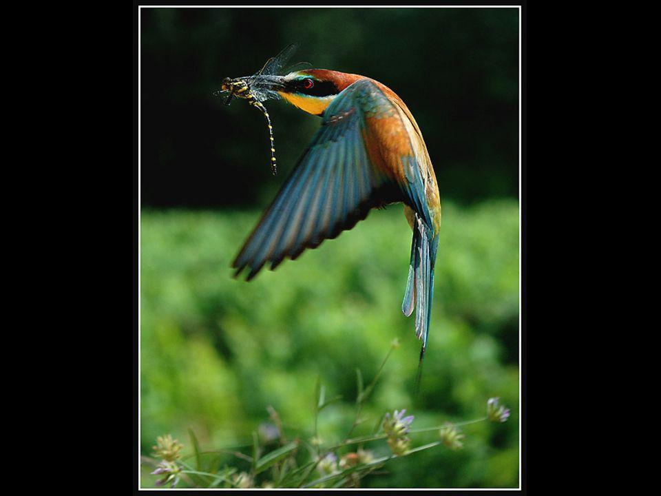 Über ihnen wohnen die Vögel des Himmels; die lassen aus den Zweigen ihre Stimme erschallen. Psalm 104:12