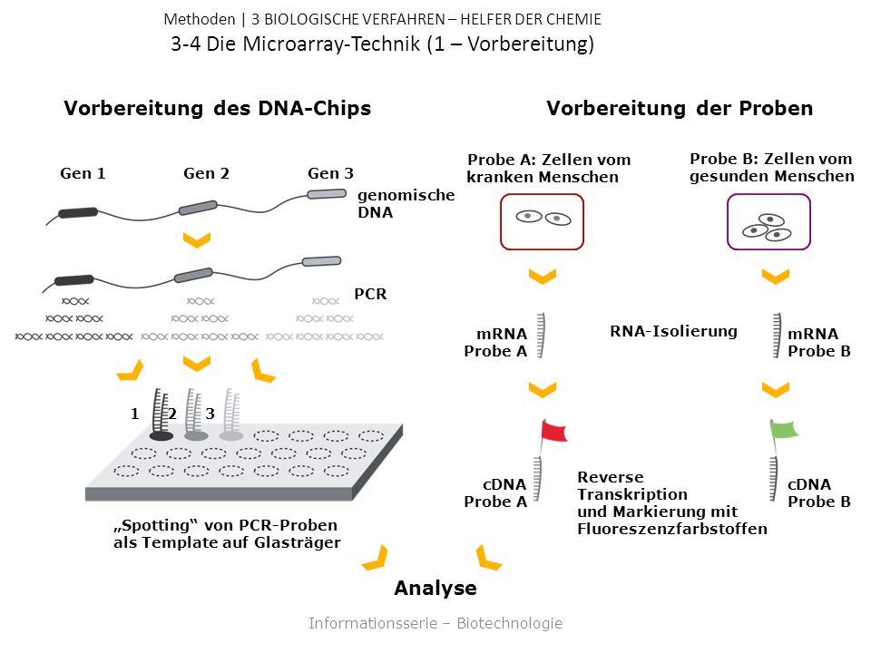 Methoden | 3 BIOLOGISCHE VERFAHREN – HELFER DER CHEMIE 3-4 Die Microarray-Technik (1 – Vorbereitung) Informationsserie – Biotechnologie Vorbereitung des DNA-ChipsVorbereitung der Proben PCR RNA-Isolierung mRNA Probe A mRNA Probe B Reverse Transkription und Markierung mit Fluoreszenzfarbstoffen cDNA Probe A cDNA Probe B Analyse Probe A: Zellen vom kranken Menschen Probe B: Zellen vom gesunden Menschen Gen 1Gen 2Gen 3 genomische DNA 321 Spotting von PCR-Proben als Template auf Glasträger