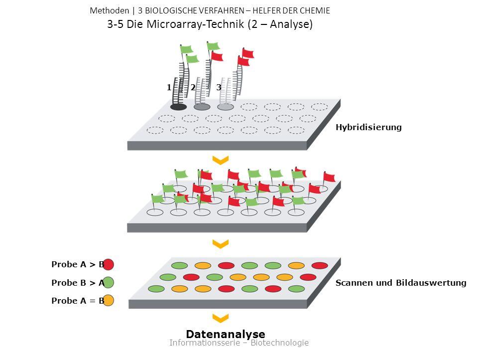 Methoden | 3 BIOLOGISCHE VERFAHREN – HELFER DER CHEMIE 3-5 Die Microarray-Technik (2 – Analyse) Informationsserie – Biotechnologie Datenanalyse Scannen und Bildauswertung Probe A > B Probe B > A Probe A = B Hybridisierung 321