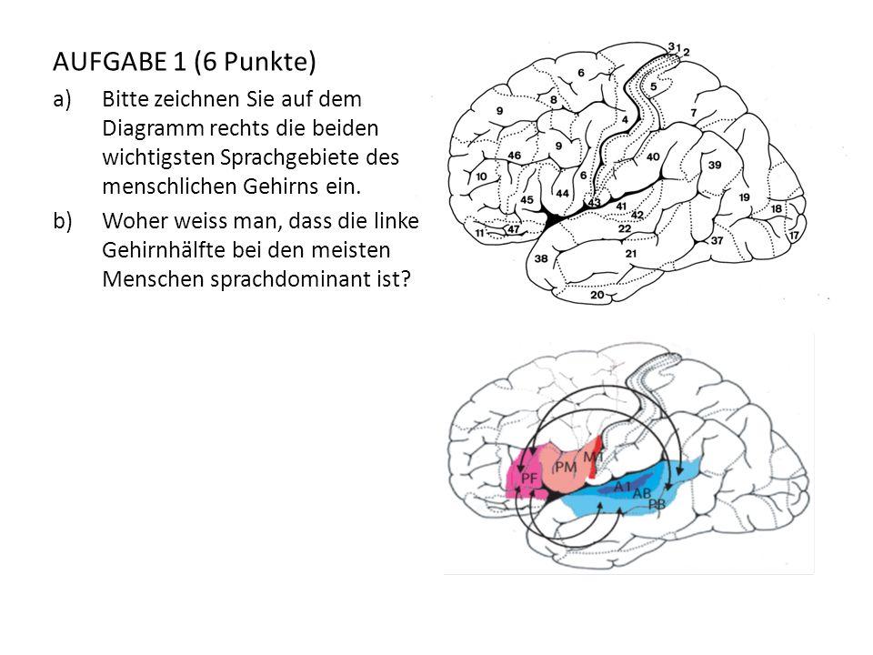 AUFGABE 1 (6 Punkte) a)Bitte zeichnen Sie auf dem Diagramm rechts die beiden wichtigsten Sprachgebiete des menschlichen Gehirns ein. b)Woher weiss man