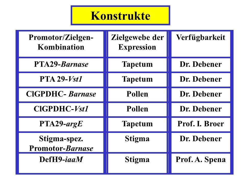 Promotor/Zielgen- Kombination Zielgewebe der Expression Verfügbarkeit PTA29-BarnaseTapetumDr. Debener PTA 29-Vst1TapetumDr. Debener ClGPDHC- BarnasePo