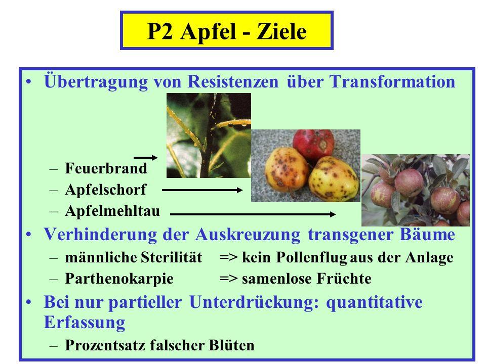 Übertragung von Resistenzen über Transformation –Feuerbrand –Apfelschorf –Apfelmehltau Verhinderung der Auskreuzung transgener Bäume –männliche Steril