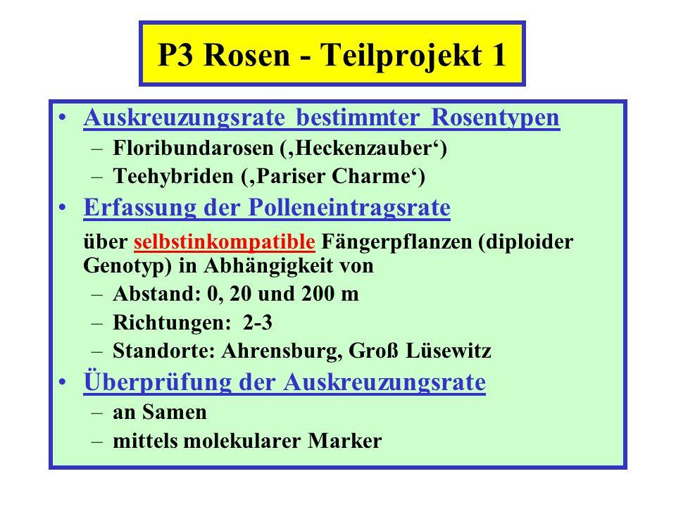 P3 Rosen - Teilprojekt 1 Auskreuzungsrate bestimmter Rosentypen –Floribundarosen (Heckenzauber) –Teehybriden (Pariser Charme) Erfassung der Polleneint