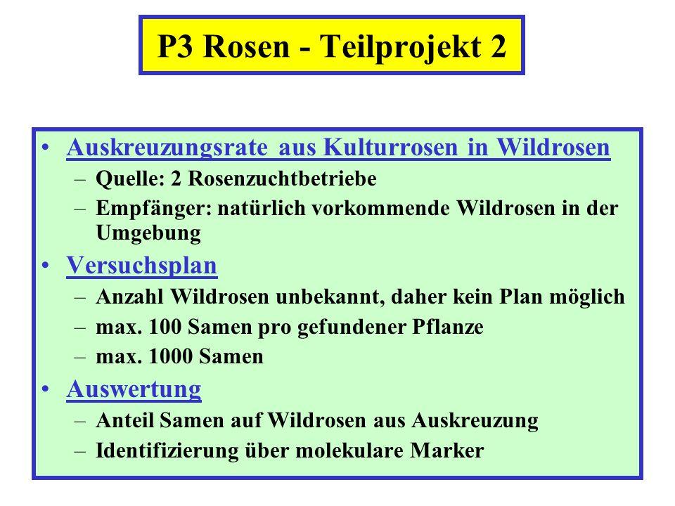 P3 Rosen - Teilprojekt 2 Auskreuzungsrate aus Kulturrosen in Wildrosen –Quelle: 2 Rosenzuchtbetriebe –Empfänger: natürlich vorkommende Wildrosen in de