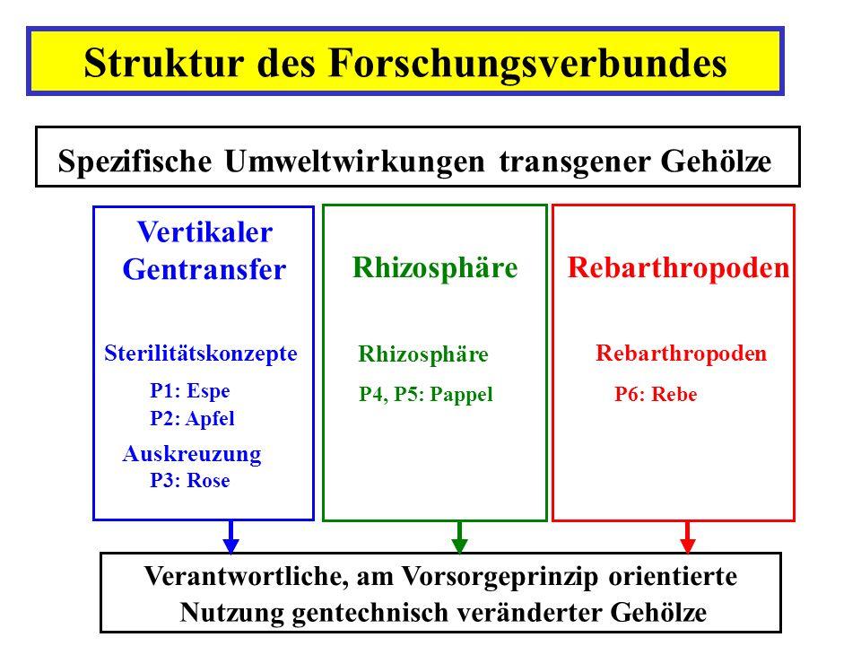 Struktur des Forschungsverbundes Spezifische Umweltwirkungen transgener Gehölze Rhizosphäre P4, P5: Pappel Rebarthropoden P6: Rebe Verantwortliche, am