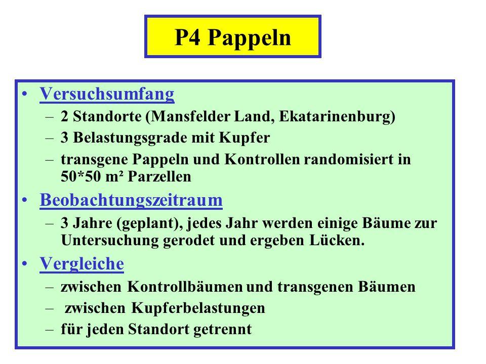 Versuchsumfang –2 Standorte (Mansfelder Land, Ekatarinenburg) –3 Belastungsgrade mit Kupfer –transgene Pappeln und Kontrollen randomisiert in 50*50 m²