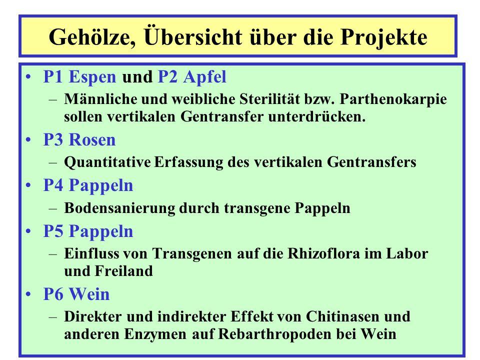 P3 Rosen - Teilprojekt 1 (Versuchsplan) PC Heck F F F F FF 20200 F F20 200 Versuchskern: 5 Pariser Charm 5 Heckenzauber Mantel: 20 Fängerpflanzen in 20 bzw.