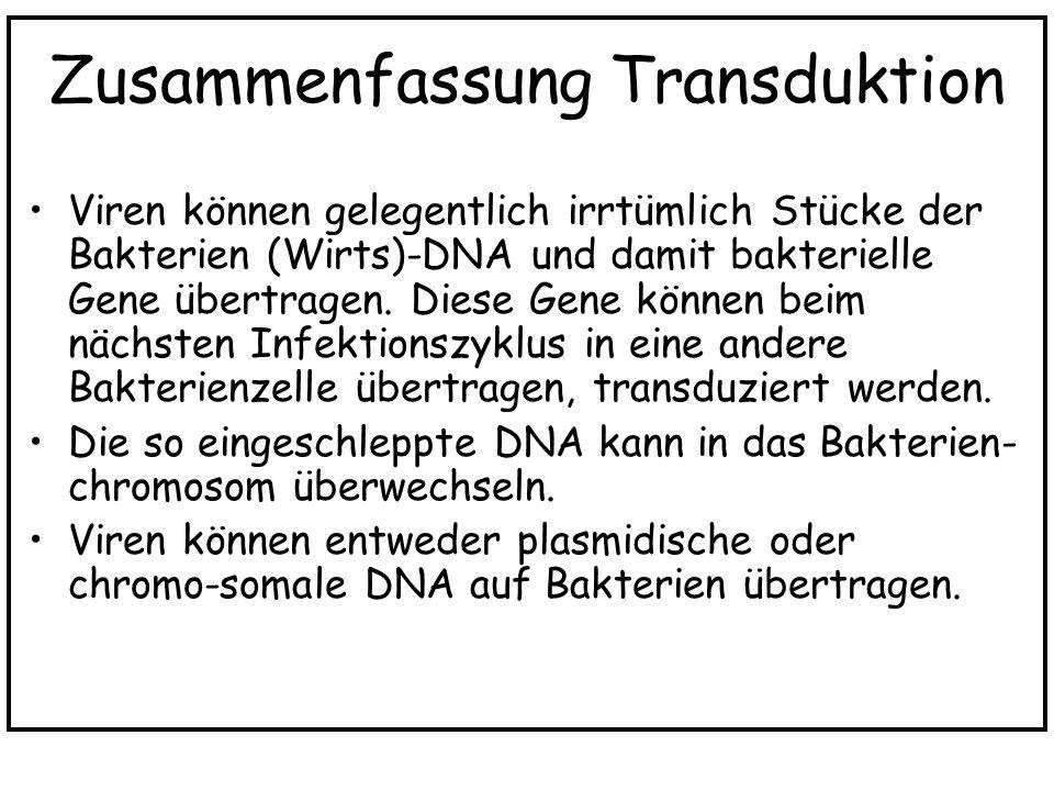 Zusammenfassung Transduktion Viren können gelegentlich irrtümlich Stücke der Bakterien (Wirts)-DNA und damit bakterielle Gene übertragen. Diese Gene k