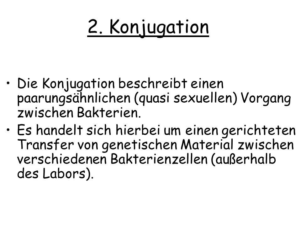 2. Konjugation Die Konjugation beschreibt einen paarungsähnlichen (quasi sexuellen) Vorgang zwischen Bakterien. Es handelt sich hierbei um einen geric
