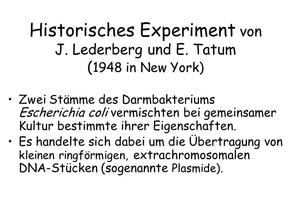 Historisches Experiment von J. Lederberg und E. Tatum ( 1948 in New York) Zwei Stämme des Darmbakteriums Escherichia coli vermischten bei gemeinsamer