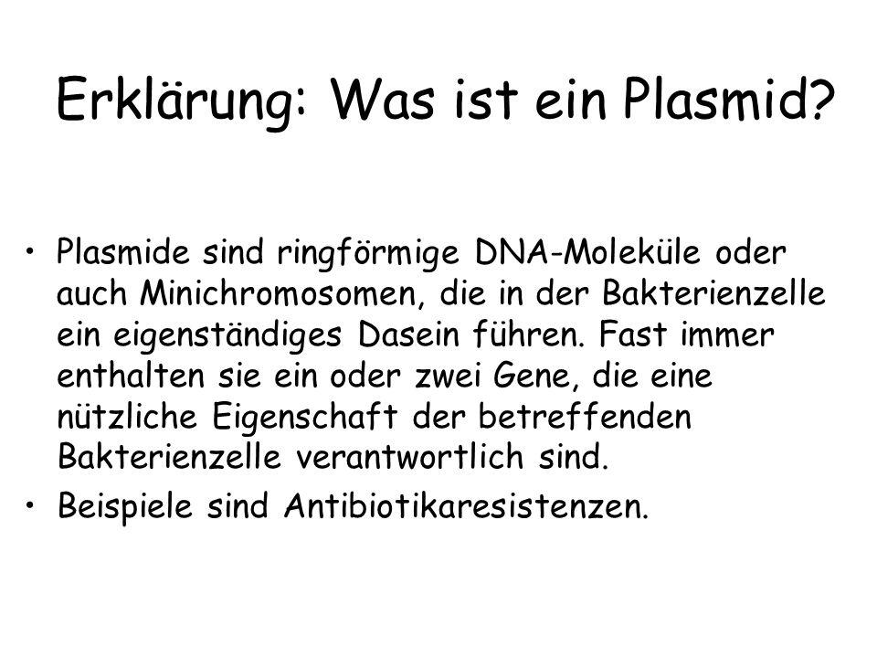Erklärung: Was ist ein Plasmid? Plasmide sind ringförmige DNA-Moleküle oder auch Minichromosomen, die in der Bakterienzelle ein eigenständiges Dasein