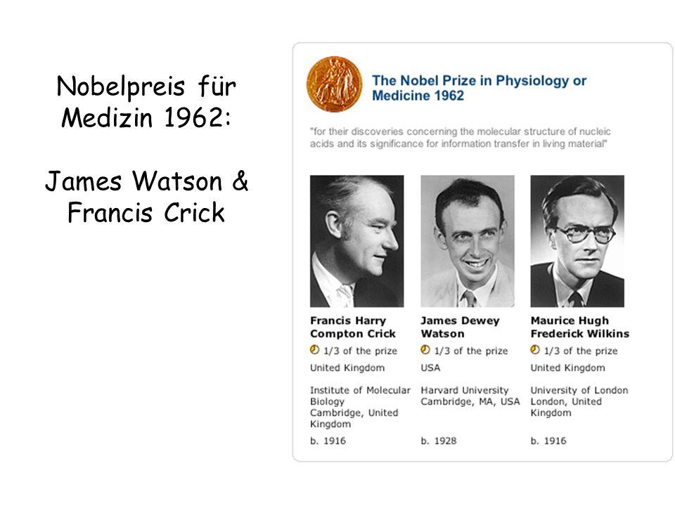 Nobelpreis für Medizin 1962: James Watson & Francis Crick
