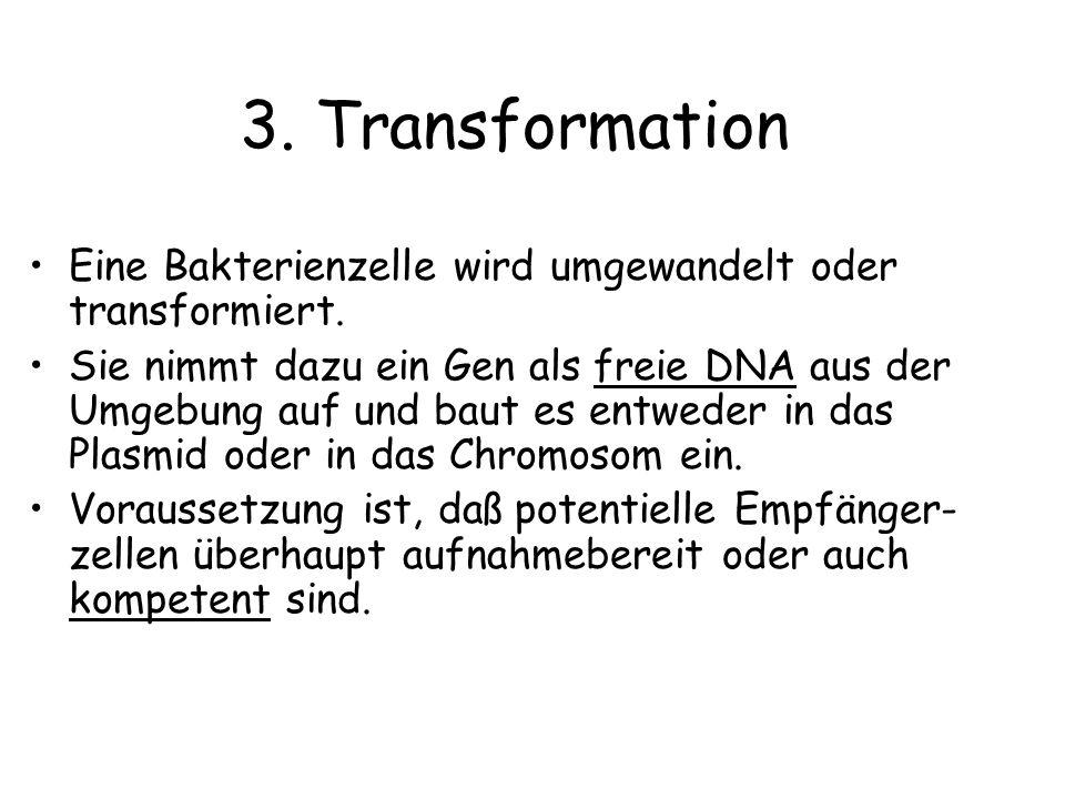 3. Transformation Eine Bakterienzelle wird umgewandelt oder transformiert. Sie nimmt dazu ein Gen als freie DNA aus der Umgebung auf und baut es entwe