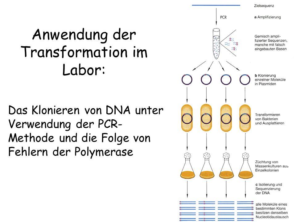 Anwendung der Transformation im Labor: Das Klonieren von DNA unter Verwendung der PCR- Methode und die Folge von Fehlern der Polymerase