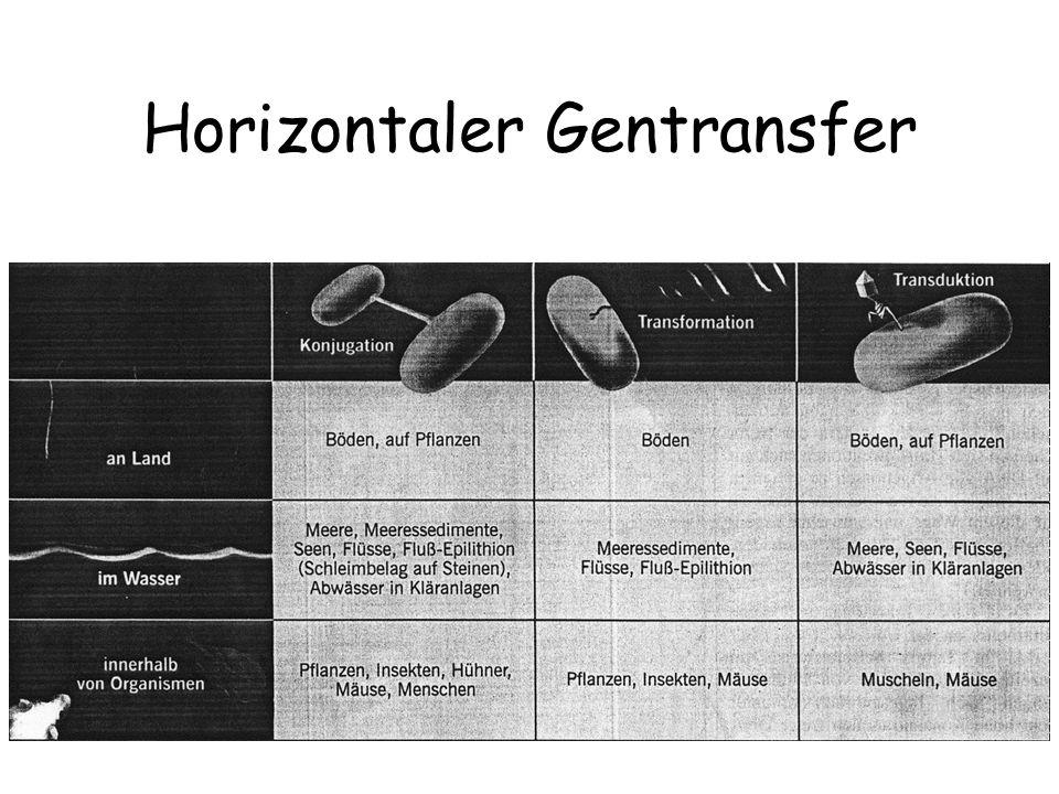 Horizontaler Gentransfer