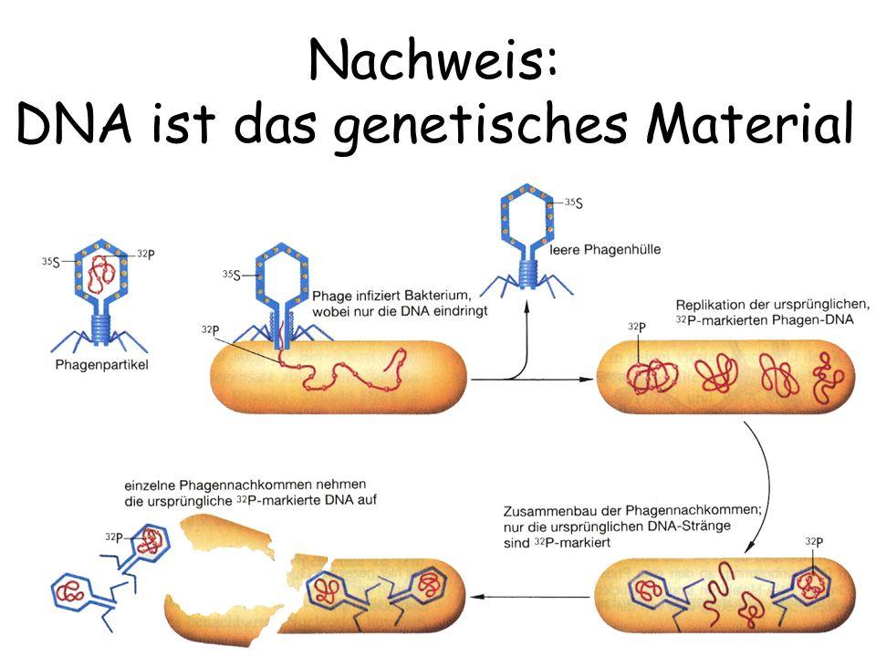 Nachweis: DNA ist das genetisches Material