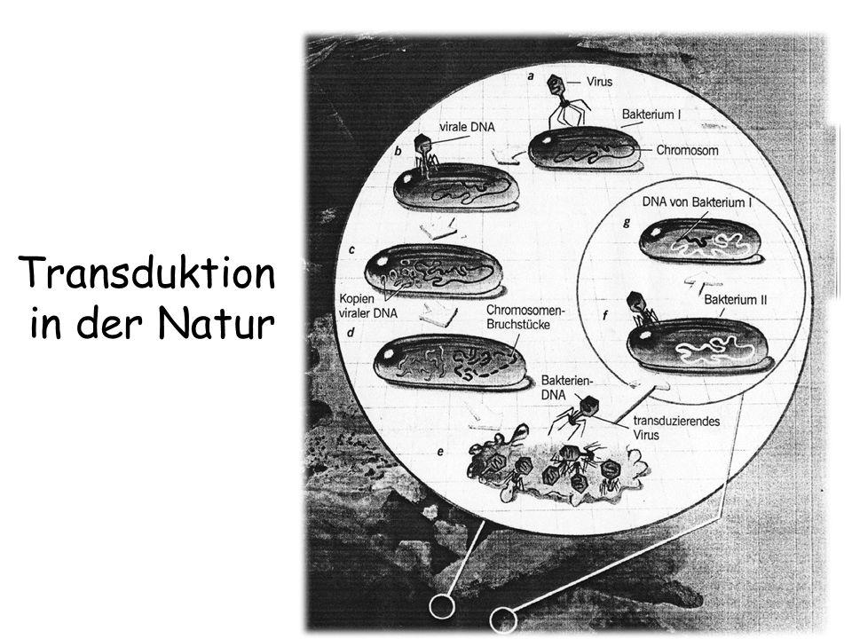 Transduktion in der Natur