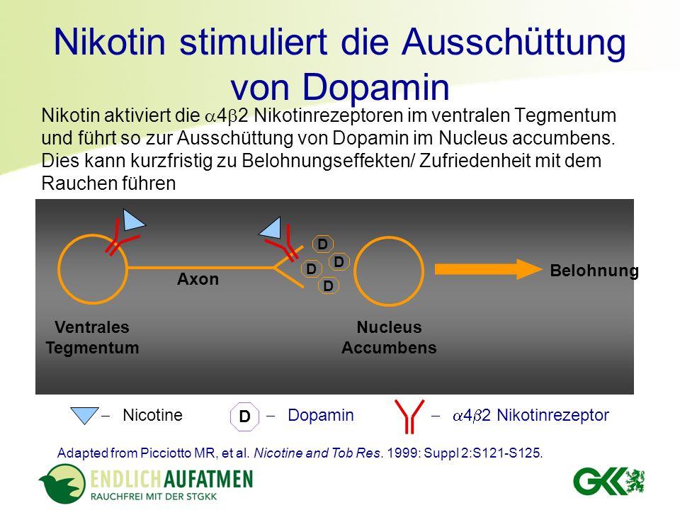 Nikotin stimuliert die Ausschüttung von Dopamin Nikotin aktiviert die 4 2 Nikotinrezeptoren im ventralen Tegmentum und führt so zur Ausschüttung von D