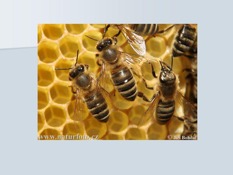 Altruismus bei nicht verwandten Individuen, welche einander helfen besondere Form von Altruismus bei Anubispavian besondere Form von Altruismus bei Anubispavian Verbündung zweier weibchenloser Paviane Verbündung zweier weibchenloser Paviane ein weibchenloser Pavian lenkt das Männchen eines Paares ab ein weibchenloser Pavian lenkt das Männchen eines Paares ab andere Pavian paart sich mit dem Weibchen andere Pavian paart sich mit dem Weibchen