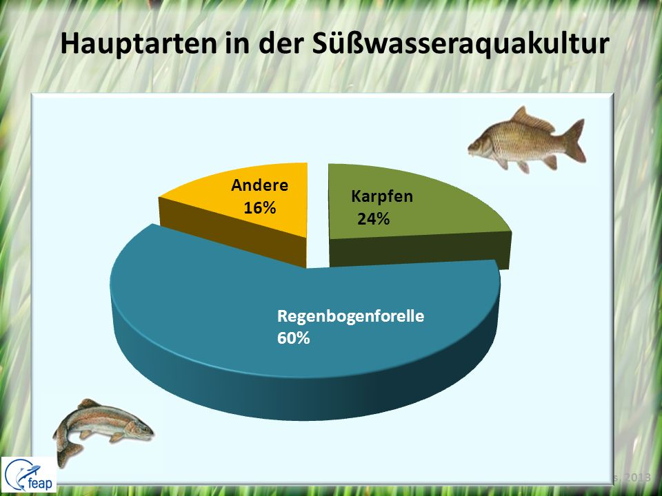 Hauptarten in der Süßwasseraquakultur Source: FAO Fishstat Plus, 2013