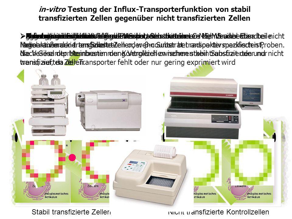 in-vitro Testung der Influx-Transporterfunktion von stabil transfizierten Zellen gegenüber nicht transfizierten Zellen Zellen lysieren Stabil transfiz