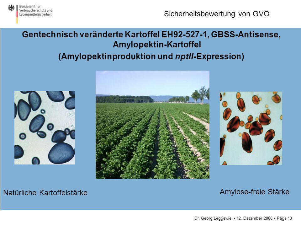 Dr. Georg Leggewie 12. Dezember 2006 Page 13 Sicherheitsbewertung von GVO Gentechnisch veränderte Kartoffel EH92-527-1, GBSS-Antisense, Amylopektin-Ka