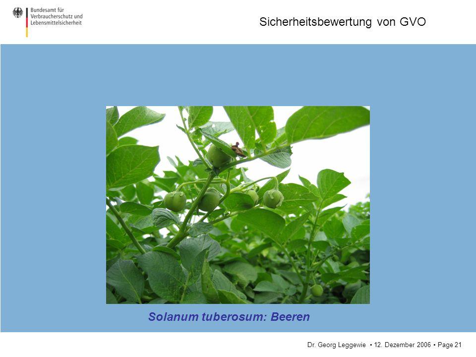 Dr. Georg Leggewie 12. Dezember 2006 Page 21 Sicherheitsbewertung von GVO Solanum tuberosum: Beeren