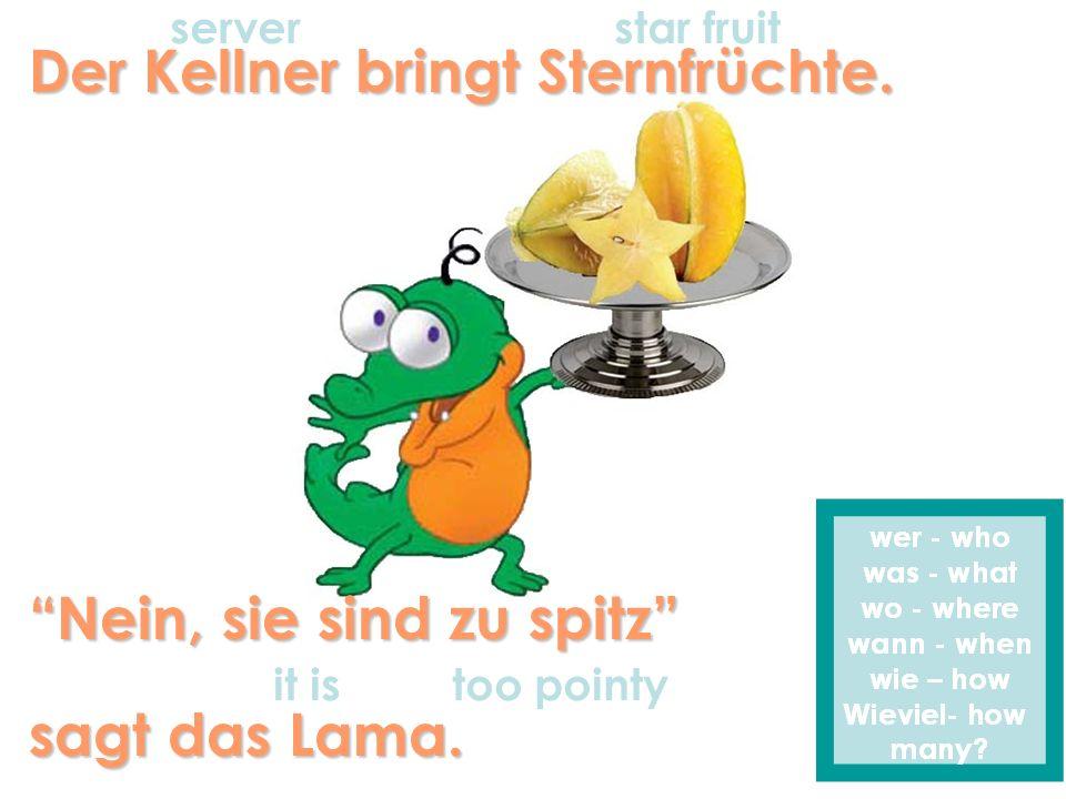 Der Kellner bringt Sternfrüchte. Nein, sie sind zu spitz sagt das Lama. serverstar fruit it is too pointy
