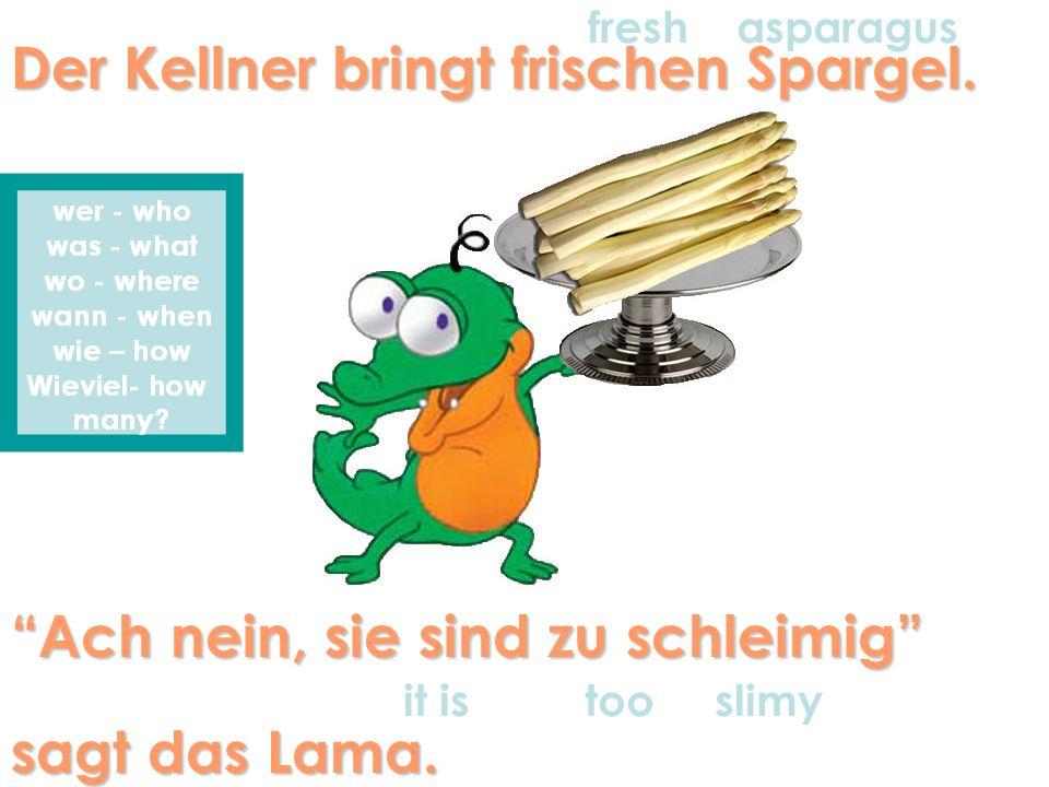 Der Kellner bringt frischen Spargel. fresh asparagus Ach nein, sie sind zu schleimig sagt das Lama. it istoo slimy
