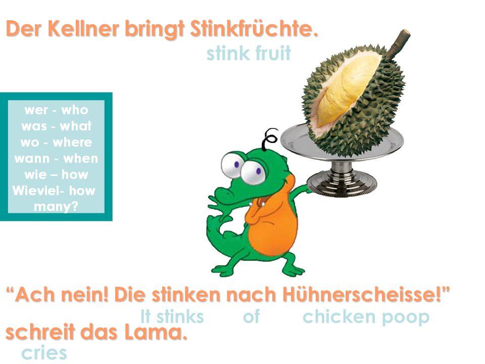 Der Kellner bringt Stinkfrüchte. Ach nein! Die stinken nach Hühnerscheisse! schreit das Lama. stink fruit It stinks of chicken poop cries