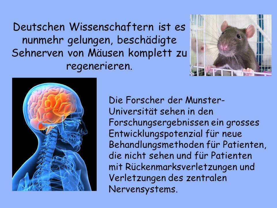 Deutschen Wissenschaftern ist es nunmehr gelungen, beschädigte Sehnerven von Mäusen komplett zu regenerieren. Die Forscher der Munster- Universität se