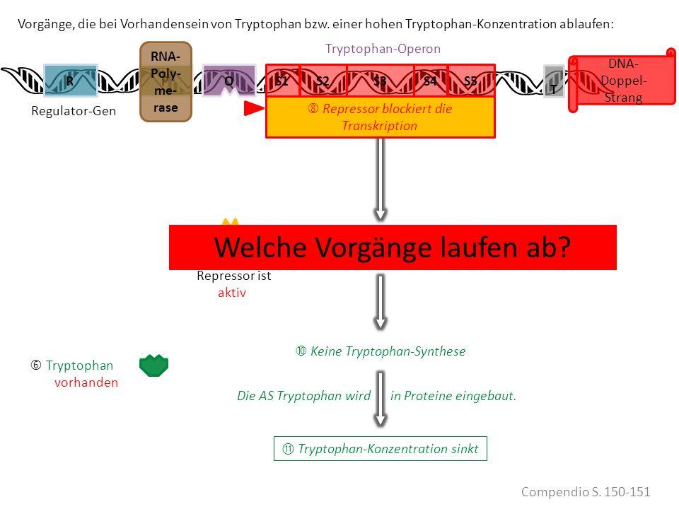 Tryptophan FEHLT Repressor ist INaktiv S1PS2RS3S4S5 DNA- Doppel- Strang Vorgänge, die bei Vorhandensein von Tryptophan bzw. einer hohen Tryptophan-Kon