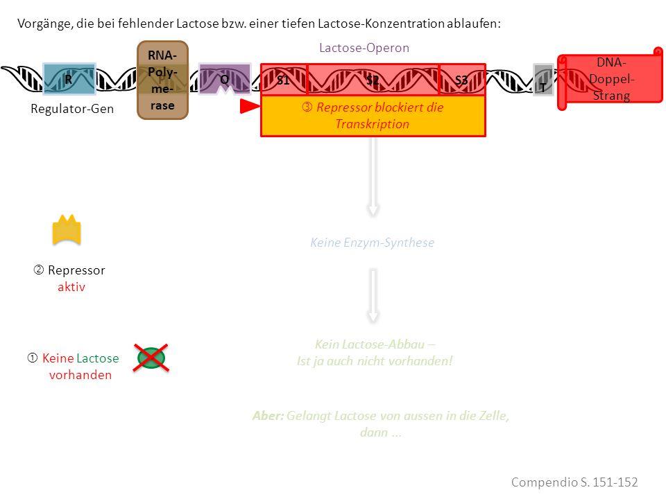 Lactose eii VORHANDEN Keine Lactose vorhanden Repressor aktiv PR DNA- Doppel- Strang Vorgänge, die bei fehlender Lactose bzw. einer tiefen Lactose-Kon